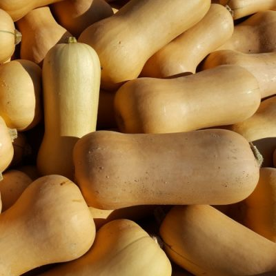 Courges Butternut BIO