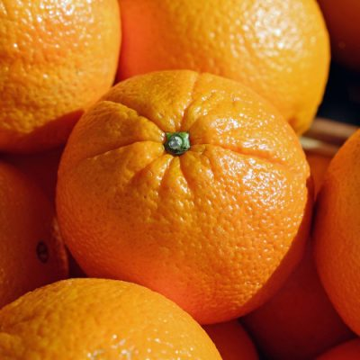 Oranges Corses en conversion BIO